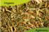Organic Agrimony Dried Herb 200gm